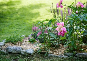 cabin-flowers